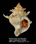Babelomurex cariniferoides