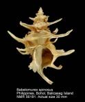 Babelomurex spinosus