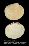 Protocallithaca adamsi