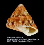 Clanculus peccatus