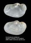 Periplomatidae