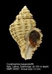Coralliophila meyendorffii