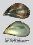 Crenomytilus grayanus