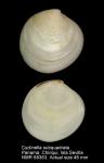 Cyclinella subquadrata