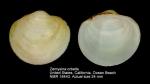 Diplodonta orbella
