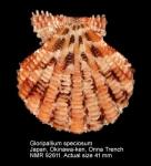Gloripallium speciosum