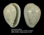 Granulina gofasi