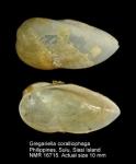 Gregariella coralliophaga