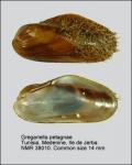 Gregariella petagnae