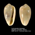 Hydroginella tridentata