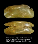 Idas simpsoni