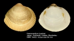 Keenocardium buelowi
