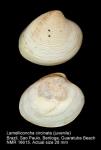 Lamelliconcha circinata