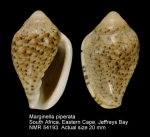 Marginella piperata