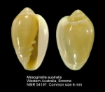 Mesoginella australis