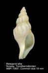 Ptychatractidae