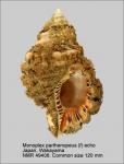 Monoplex parthenopeus