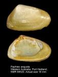 Mesodesmatidae