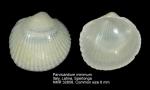 Parvicardium minimum
