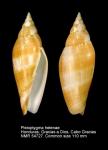 Pleioptygma helenae