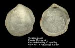 Thyasiridae