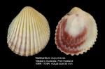 Vasticardium dupuchense