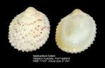 Vasticardium fultoni