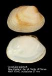 Venerupis largillierti