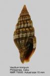 Mollusca (molluscs)