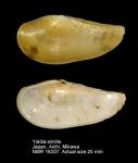 Yoldiidae