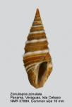 Zonulispira zonulata