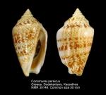 Conomurex persicus