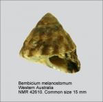 Bembicium melanostoma