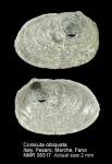 Montacutidae