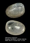 Altenaeum dawsoni