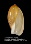 Anolacia mauritiana