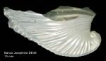 Carinaria mediterranea Blainville, 1825Shell from Josephine Seamount (actual size 15 mm).