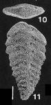 Rhombobolivinella romboidalis (Krasheninnikov & Koshevnikova)