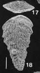 Rhombobolivinella sztrakosi Hayward HOLOTYPE