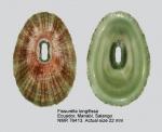 Fissurella longifissa