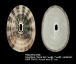 Fissurella picta