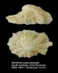 Montfortia subemarginata