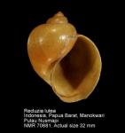 Janthinidae