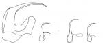 Prognathorhynchus karlingi