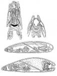 Clyporhynchus monolentis