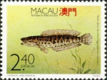 Ophiocephalus maculatus
