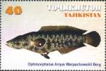 Ophiocephalus argus