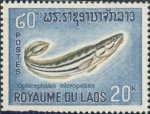 Ophiocephalus micropeltes