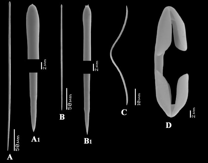 Artemisina melana spicules