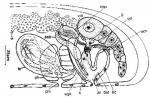 Haloplanella longatuba